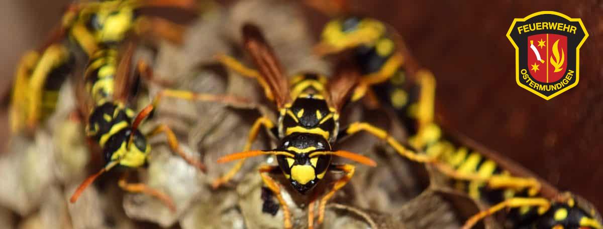 Permalink auf:Insektenbekämpfung durch die Feuerwehr Ostermundigen eingestellt